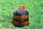 Grapes in wood barrel — Stock Photo