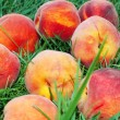 Peach over grass - Stock Photo