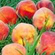 Peach over grass - Photo