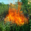Stock Photo: Fire in green grass