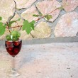 Vine shoot over wine glass — Stock Photo