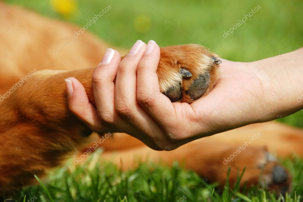 Yellow dog paw and human hand shaking, friendship — Stok fotoğraf #2961654