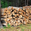 Wood pile — Stock Photo #2986833