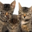 Three sitting sleeping cats — Stock Photo