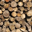 Wood pile — Stock fotografie #3014295