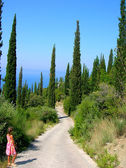 Way between cypresses — Stock Photo