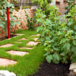 Garden in home yard — Stock Photo