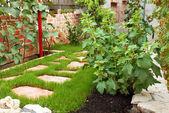 Jardin dans maison cour — Photo