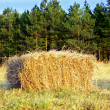 Wafer of hay - Stock Photo
