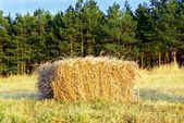 Wafer of hay — Stock Photo