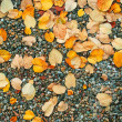 Autumn wet leaves background over rocks — Stock Photo