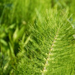 Green botanic background — Stockfoto