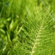 Green botanic background — Stock Photo #3172207