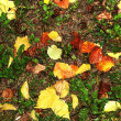 Autumn wet leaves background — Stock Photo