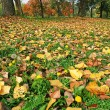 Autumn ground — Photo