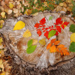 Autumn leaves — Stock Photo #3179157