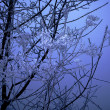 Frozen branch — Foto Stock #3270798