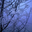 Foto de Stock  : Frozen branch