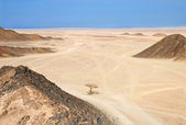 Egypt desert — Stock Photo