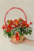 Flowers in punnet — Stock Photo