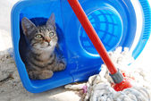 Gray cat resting in blue bucket — Stok fotoğraf