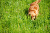 Dog in grass — Stock Photo