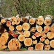 Firewood pile outdoor — Stock Photo