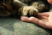 Cat paw on human hand — Stock Photo