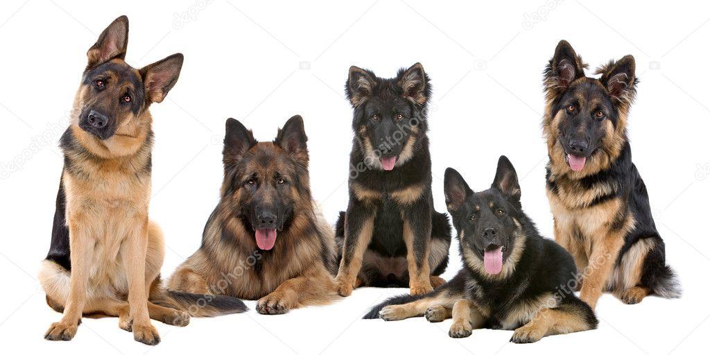 Obedient K Dog Training