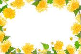 黄色花相框 — 图库照片