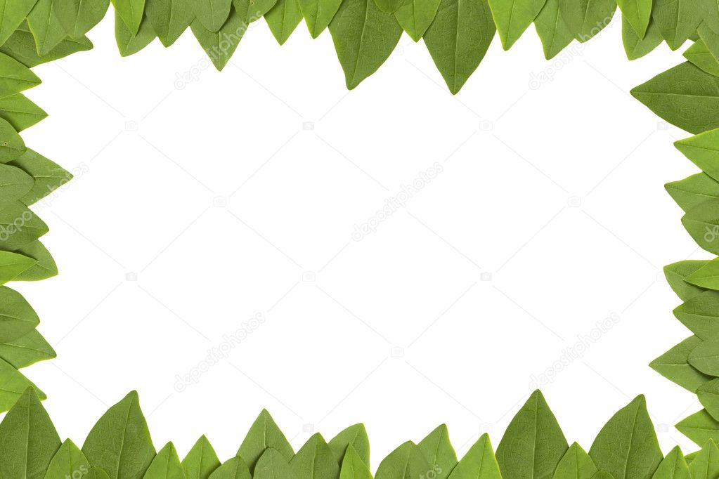 Marco De Hojas Verdes Con Fondo Blanco