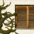 Wooden window — Stock Photo #3419461