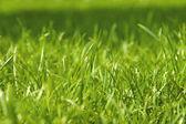 Closeup of green grass — Stock Photo