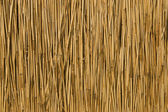 Texture of cane dry — Stock Photo