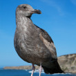 Watching Sea Gull — Stock Photo