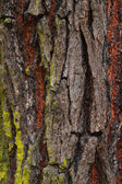 Close up redwood bark — Stock Photo