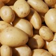 Yukon Potatoes — Stock Photo