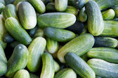 Green pickling cucumbers — Stock Photo