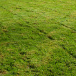 Freshly mowed grass transverse — Stock Photo