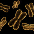 Foto Stock: X-chromosome
