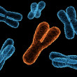X-chromosome — Stock Photo