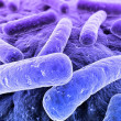 Bacteria - Stock Photo