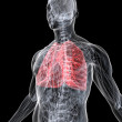 Highlighted lung — Stock Photo #2891355