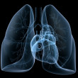 X-ray heart and lung — Stock Photo #2891715