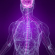 Human nervous system — Stock Photo