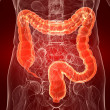 Huma colon — Stockfoto