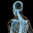 Stock Photo: Skeletal back
