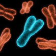 Stock Photo: X chromosome and y chromosome