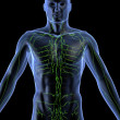 Lymphatic system - Stok fotoraf