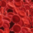Red blood cells - Foto de Stock  